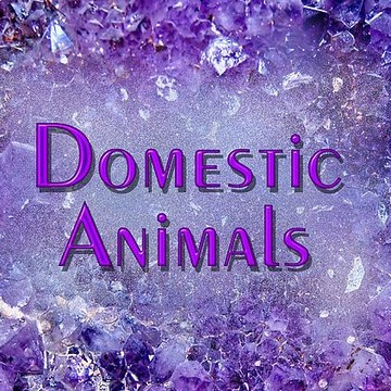 Domestic Animals Collection