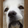 Domestic Animals-Stock Images Collection