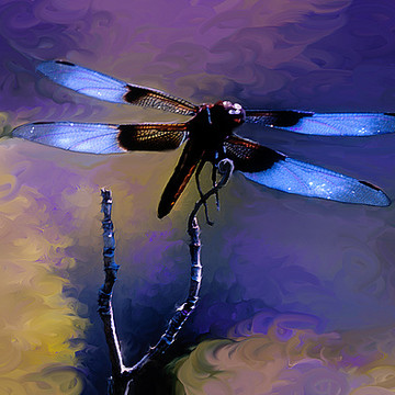 Dragonfly Art Collection