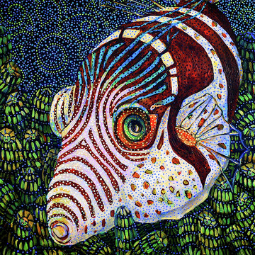 Dreamtime Fish Collection