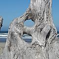 Driftwood Coastal Ocean Shores Sand Collection