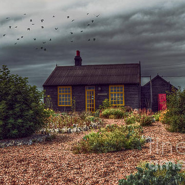 Dungeness Collection