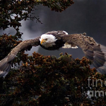 Eagles  Osprey and Hawks-Stock Images Collection