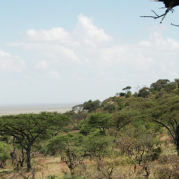 Eastern Sector - Tanzania