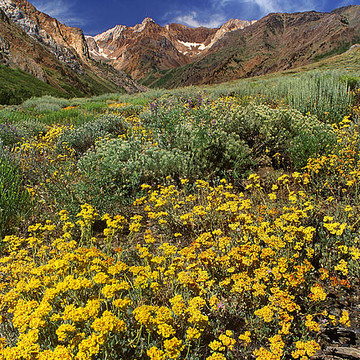 Eastern Sierras Landscapes Collection