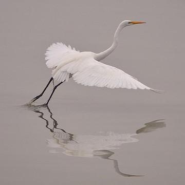 Egret Collection