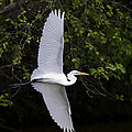 Egrets   Storks  And Herons-Stock Images Collection