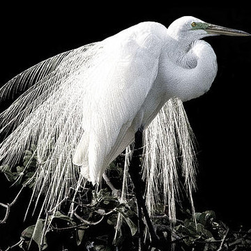 Egrets And Herons Collection