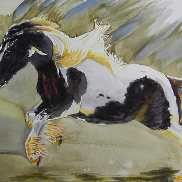 Equine and Bovine art and photography Collection