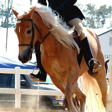 Equine Events Collection