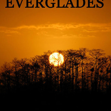 Everglades and Big Cypress Florida artworks Collection