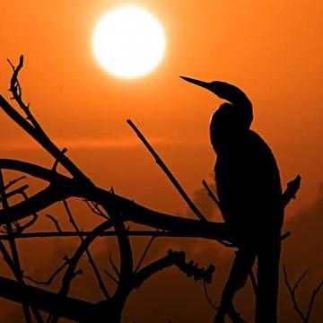 Everglades Creatures Collection