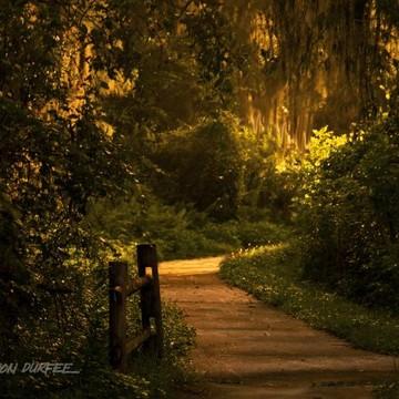 Everglades Landscape Collection