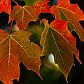 Fall aka Autumn Collection