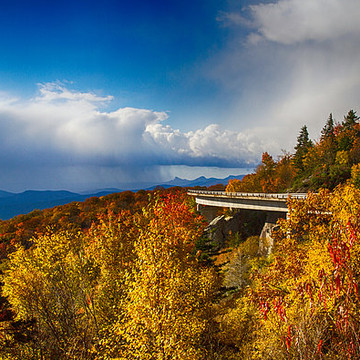 Fall and Foliage Collection