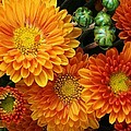 Fall Flowers and Scenes Collection