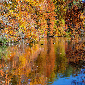 Fall Foilage and Scenes Collection