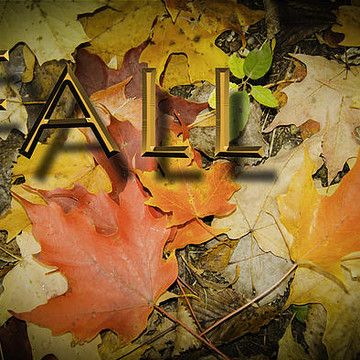 Fall In North America Collection