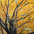 Fall Paintings by Daniel W Green Collection