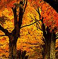 Fall Season Collection