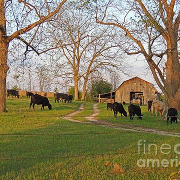 Farm Scenes Collection