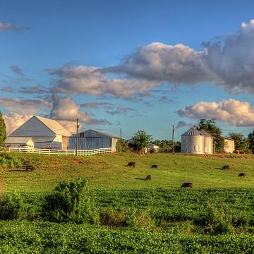 Farms Collection