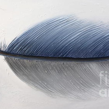 Feather Series Collection