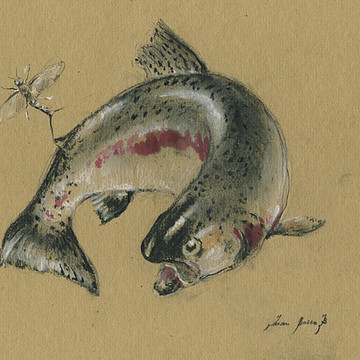 Fishes & Sea animals Collection