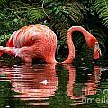 Flamingos Collection