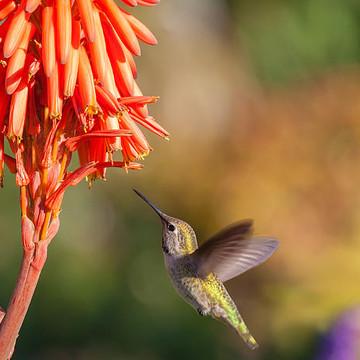 Flora and Fauna Photography