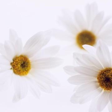 Flora and Garden Collection