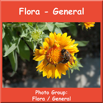 Flora General Collection