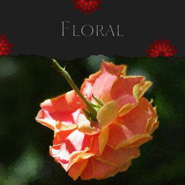 Floral Gallery Collection