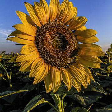Floral Photographs