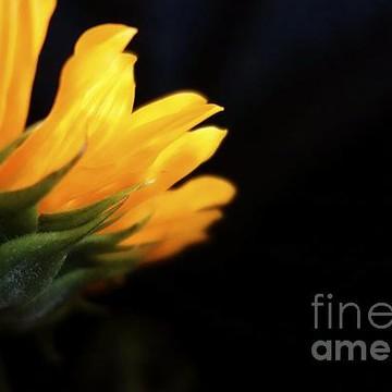 Floral Photos Collection