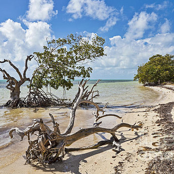Florida Beaches and Landscapes Collection