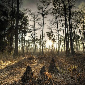 Florida Everglades And Other Wildlife - Photography Collection