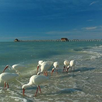 Florida Collection