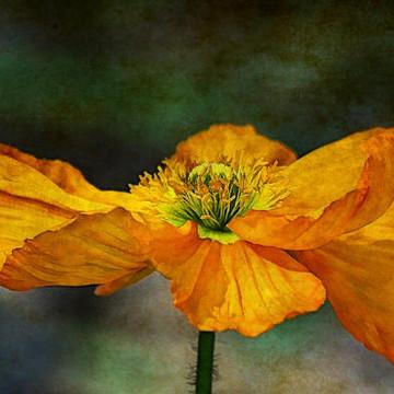 Flower art Collection