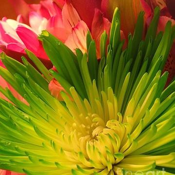 Flower Bouquet 1 Collection