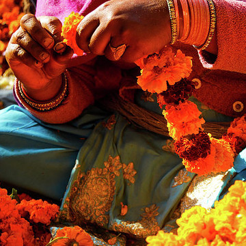 Flower Markets Of India Collection
