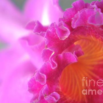 Flower Petals Collection