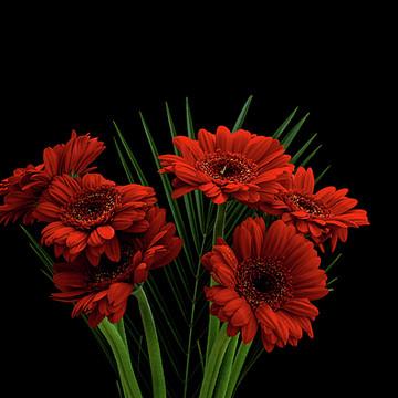 Flower VS Black Collection