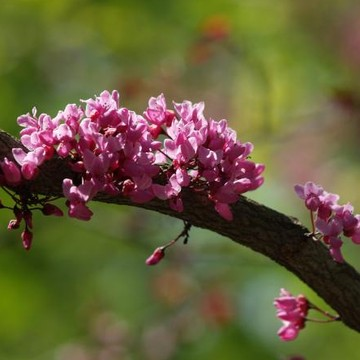 Flowering Trees and Shrubs Collection