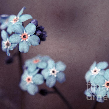 Forget Me Not 01 Collection
