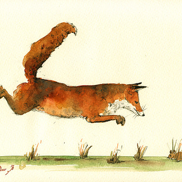 Foxes - Wolves - and another canids Collection