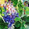 Fruits And Vegetables Watercolours Prints And Paintngs Collection