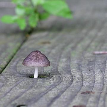 Fungus Among Us Collection