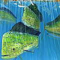 Gamefish Art