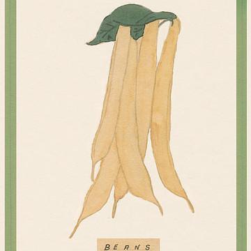 Garden Vegetable Etc. Collection